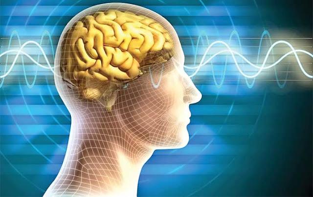 Fakta Mengerikan Parasit yang Mudah Hidup dan Menjangkit Otak Manusia Sangat Merugikan