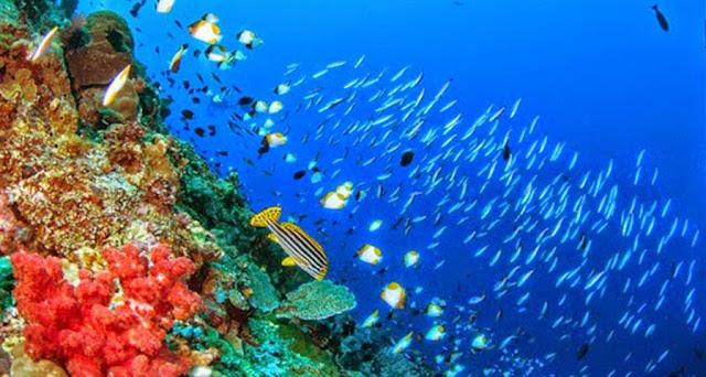 Wisata Taman Laut Bunaken