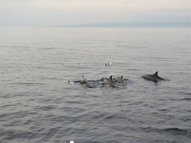 spinner dolphin watching bais philippines