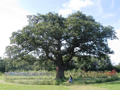 Spreading tree with person meditating