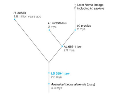 Human timelines and the tree of life.