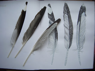 feathers in ink