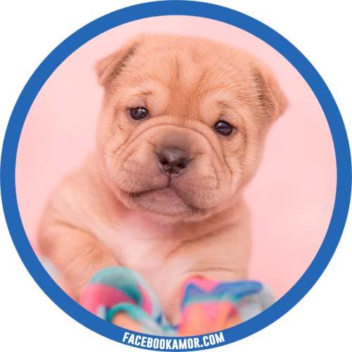 fotos de perro para perfil