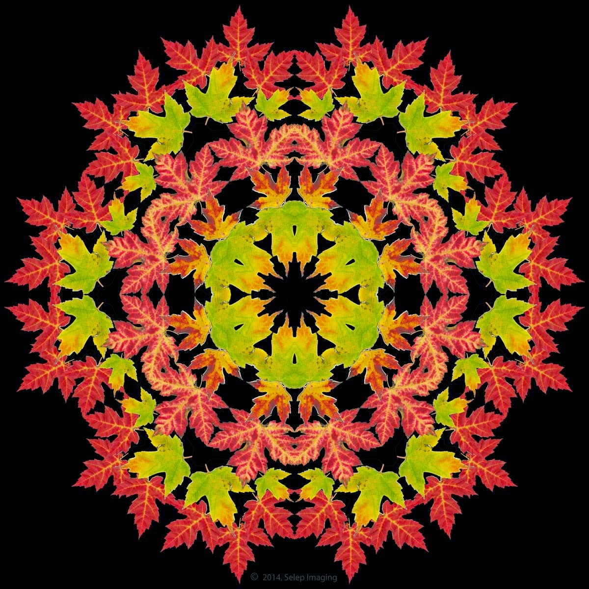 fall sumac shrubs by Jeanne Selep