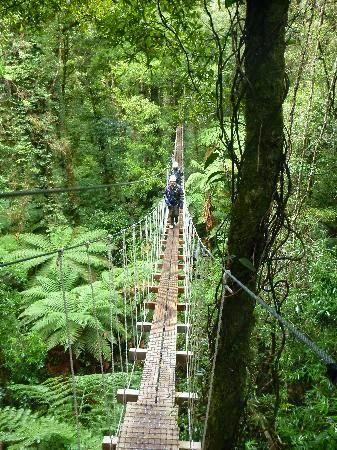 10 Best Adventure Holiday Destinations | Rotorua Canopy Tours - Rotorua, New Zealand