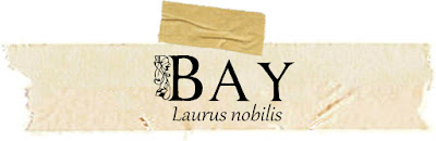 Magical and Medicinal Uses of Bay. Includes FREE BOS Page!