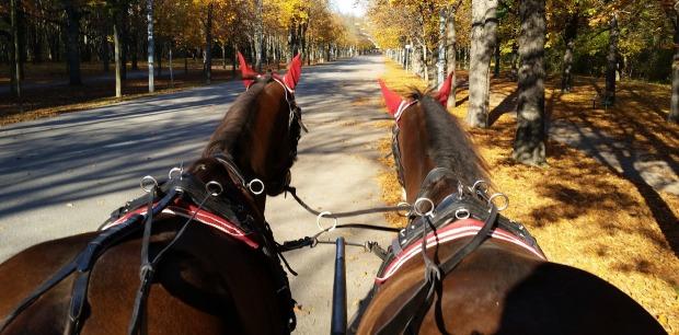 Taşıyıcı, Atlar, Fayton
