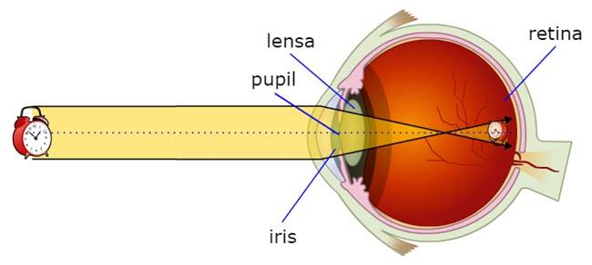 Proses melihat mata