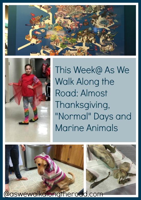 This week in our home and homeschool