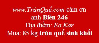 Trùn quế giống Ea Kar, Đăk Lăk