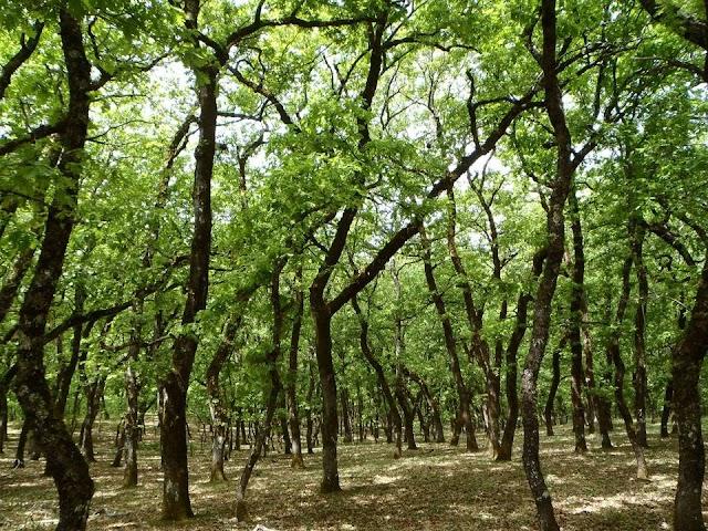 Εντυπωσιακά δάση στην Ελλάδα