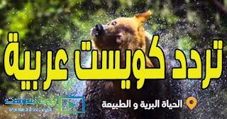 تردد قناة كويست عربية 2019 الجديد Quest Arabiya بالتفصيل
