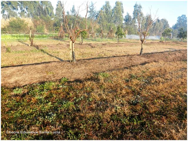 La seca y la helada afectan los cultivos - Chacra Educativa Santa Lucía