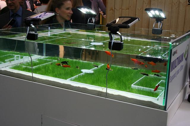 Acquariomania Foto della fiera di Norimberga Maggio 2012