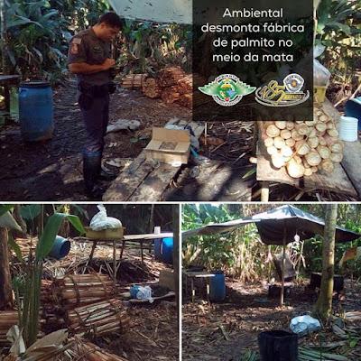Policiais Ambientais localizaram acampamento para beneficiar Palmito em Cananeia