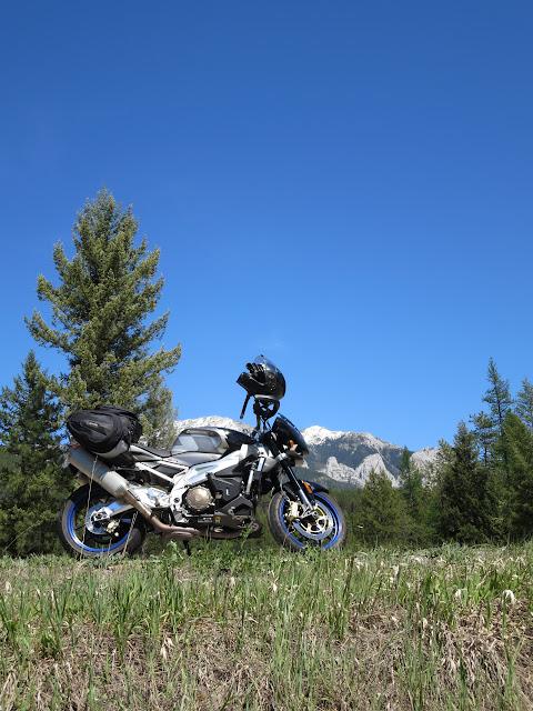 Aprilia Tuono Rockies