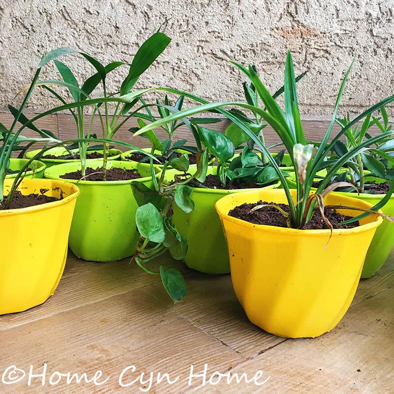 A Green Return Gift Idea Home Cyn Home