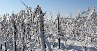 Blog vins Beaux-Vins Einswein icewine vin de glace dégustation oenologie vigne neige