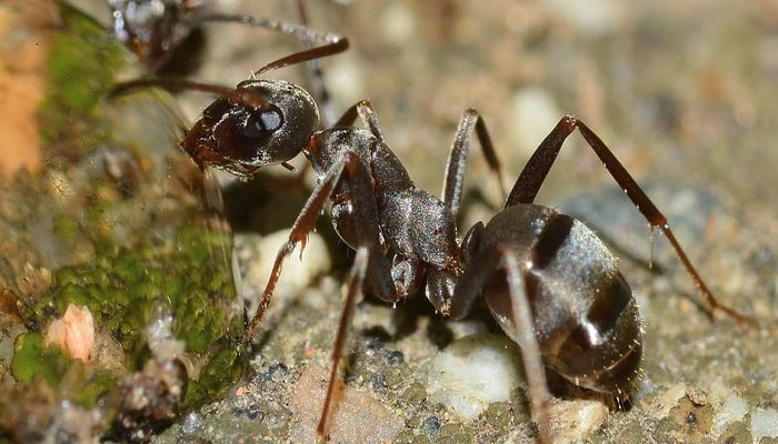5 Fakta Unik Tentang Semut yang Pasti Kamu Belum Tahu