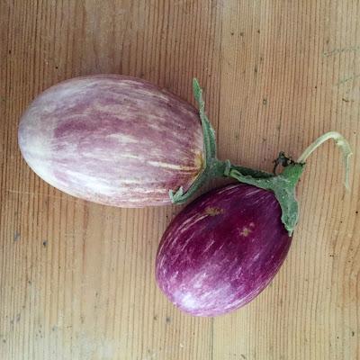 kotimainen munakoiso