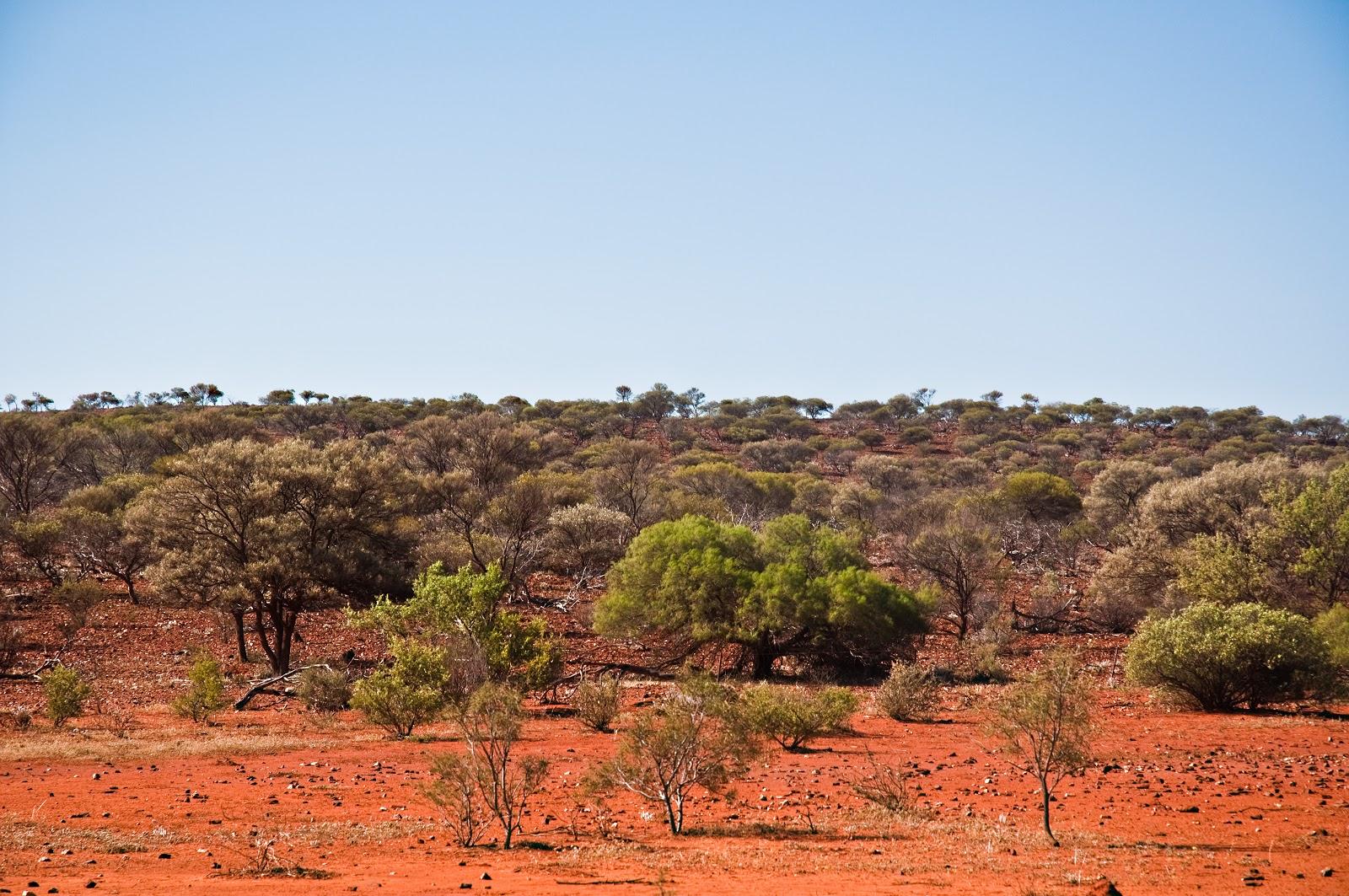 オーストラリアの叢林
