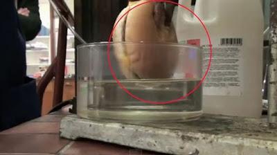 Δείτε πώς χωνεύει το στομάχι μας ένα χάμπουργκερ