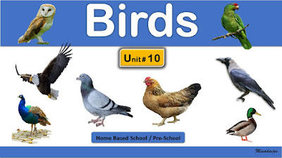Bird Names | Home Based School