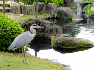 White Herron Koko-en Gardens Himeji Japan