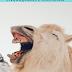 48 Expressões Portuguesas Engraçadas e Curiosas