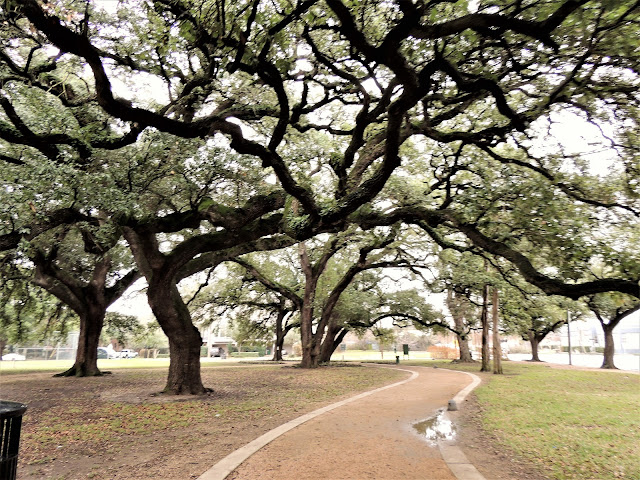 Old trees at Baldwin Park - 1701 Elgin St, Houston, TX 77004