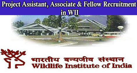 Recruitment in WII 2016 Project Assistant, Associate & Fellow Jobs in Dehradun@www.wii.gov.in
