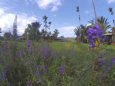 gardenia inn tomohon