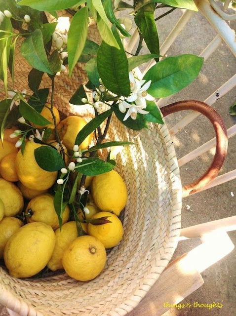 Luscious lemons Photo by Olympia from Things and thoughts com