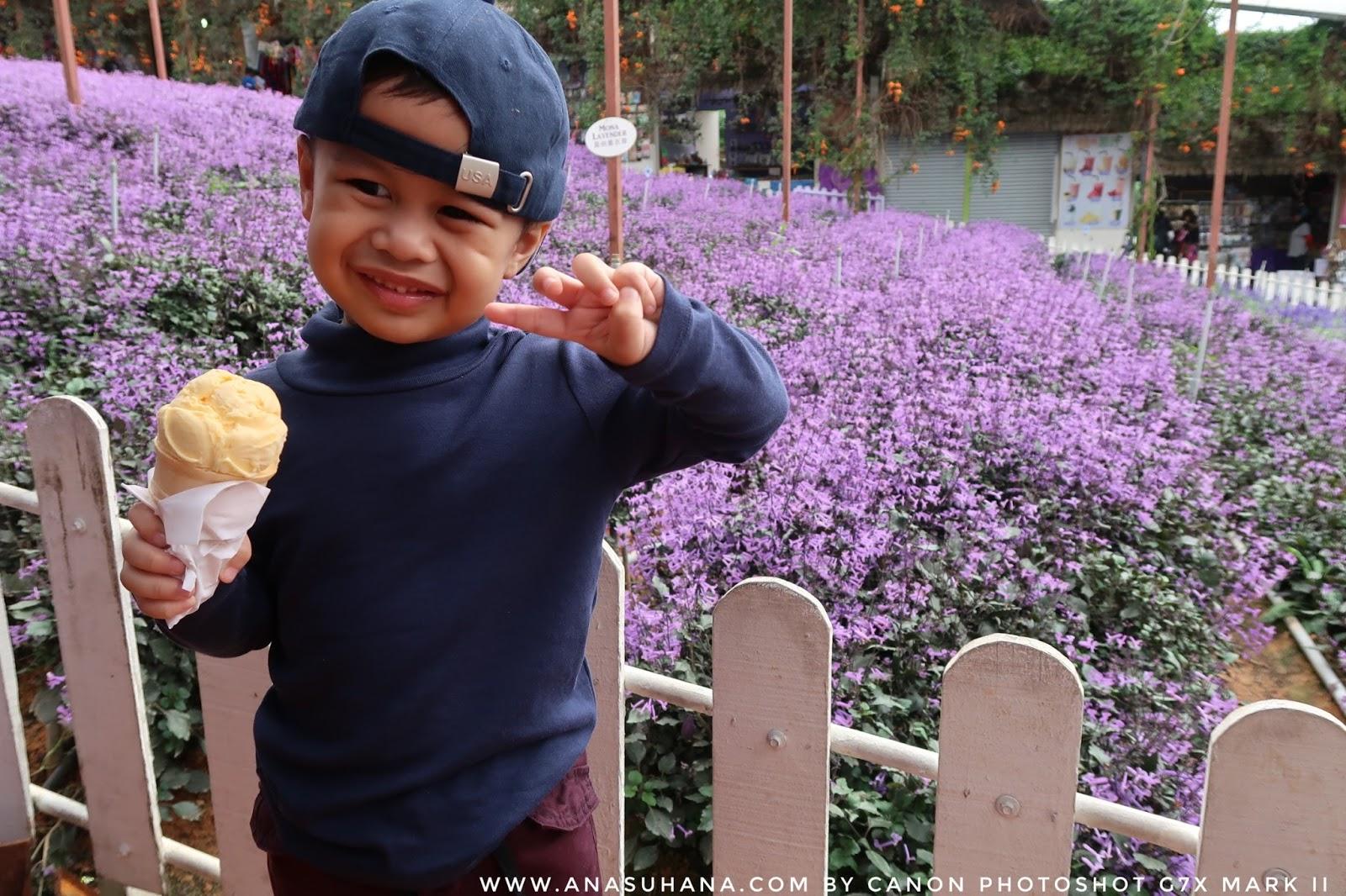 Tempat Menarik di Cameron Highlands : Cameron Lavender Garden