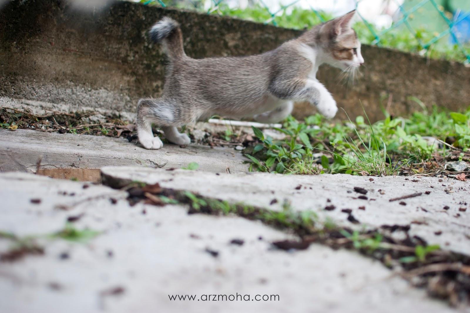 Gambar Anak Kucing Comel Yang Hilang