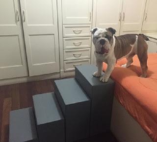 escadas cães pesados