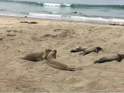 Roadtrip USA - on the road again - Calif sea Otter