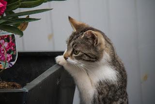 Mueeza nama kucing kesayangan nabi