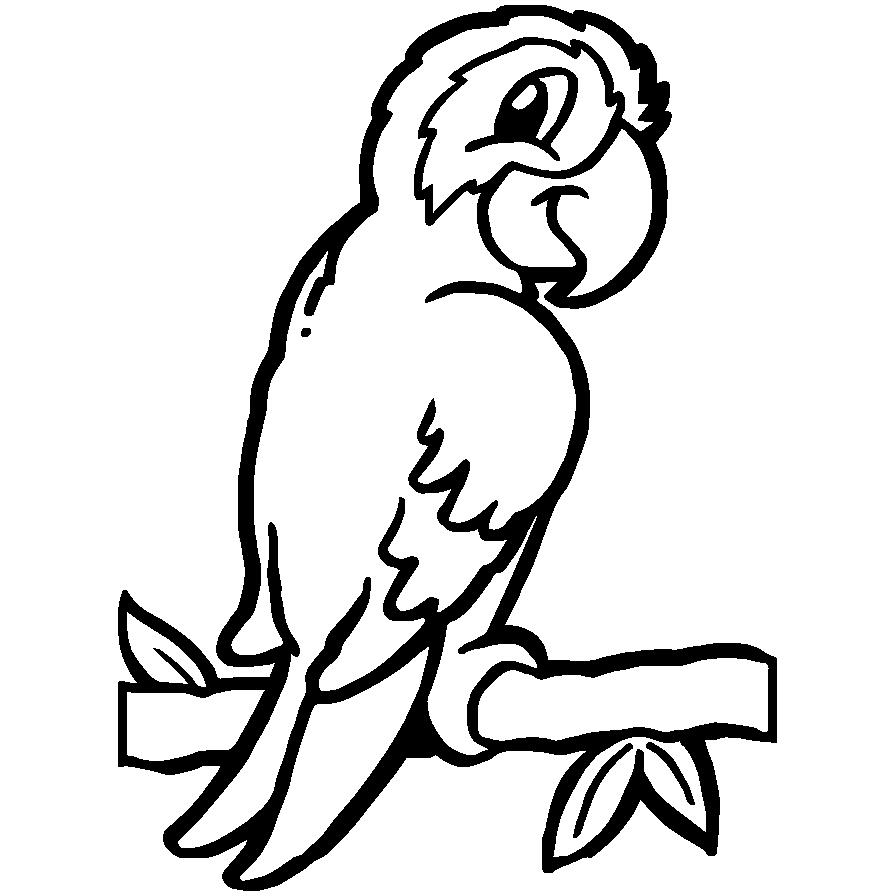 Mewarnai Gambar Burung Beo Aneka Mewarnai Gambar