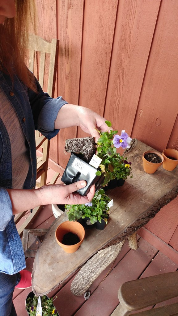 Potting Pansies #gardening goals #ad #PoiseMoment