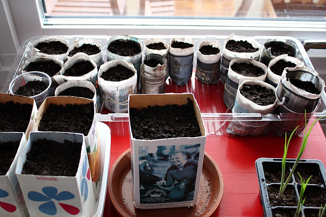 Milk carton and newspaper plant pots - ready for germination