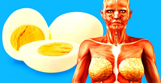 Eating One Egg A Day Protects Your Heart