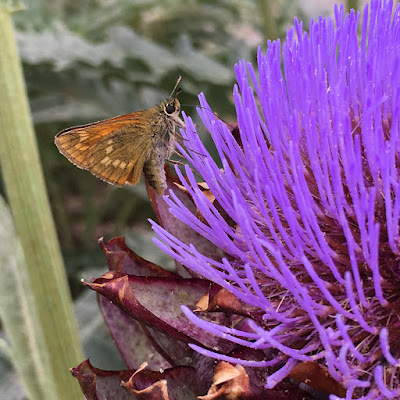Moth on an artichoke flower
