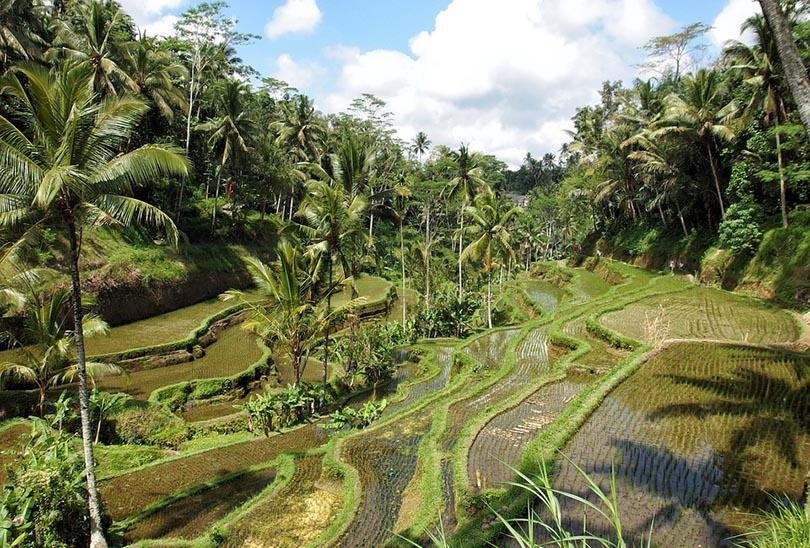Ubud, Indonesia, Asia