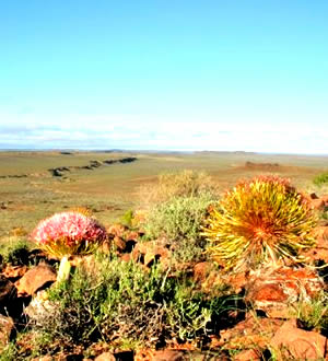 Karoo National Park vegetation