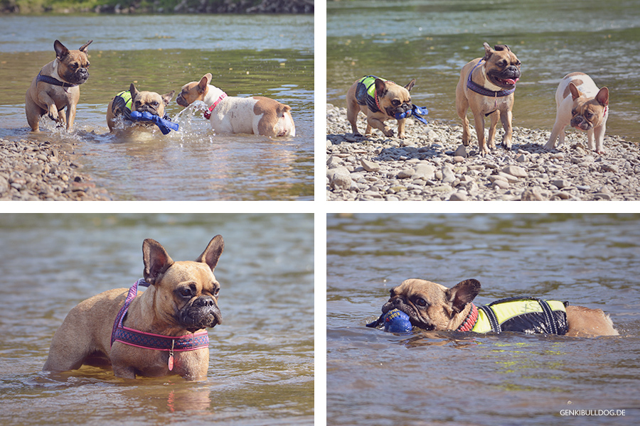 Hundeblog Genki Bulldog  Mit Hunden am Neckarstrand