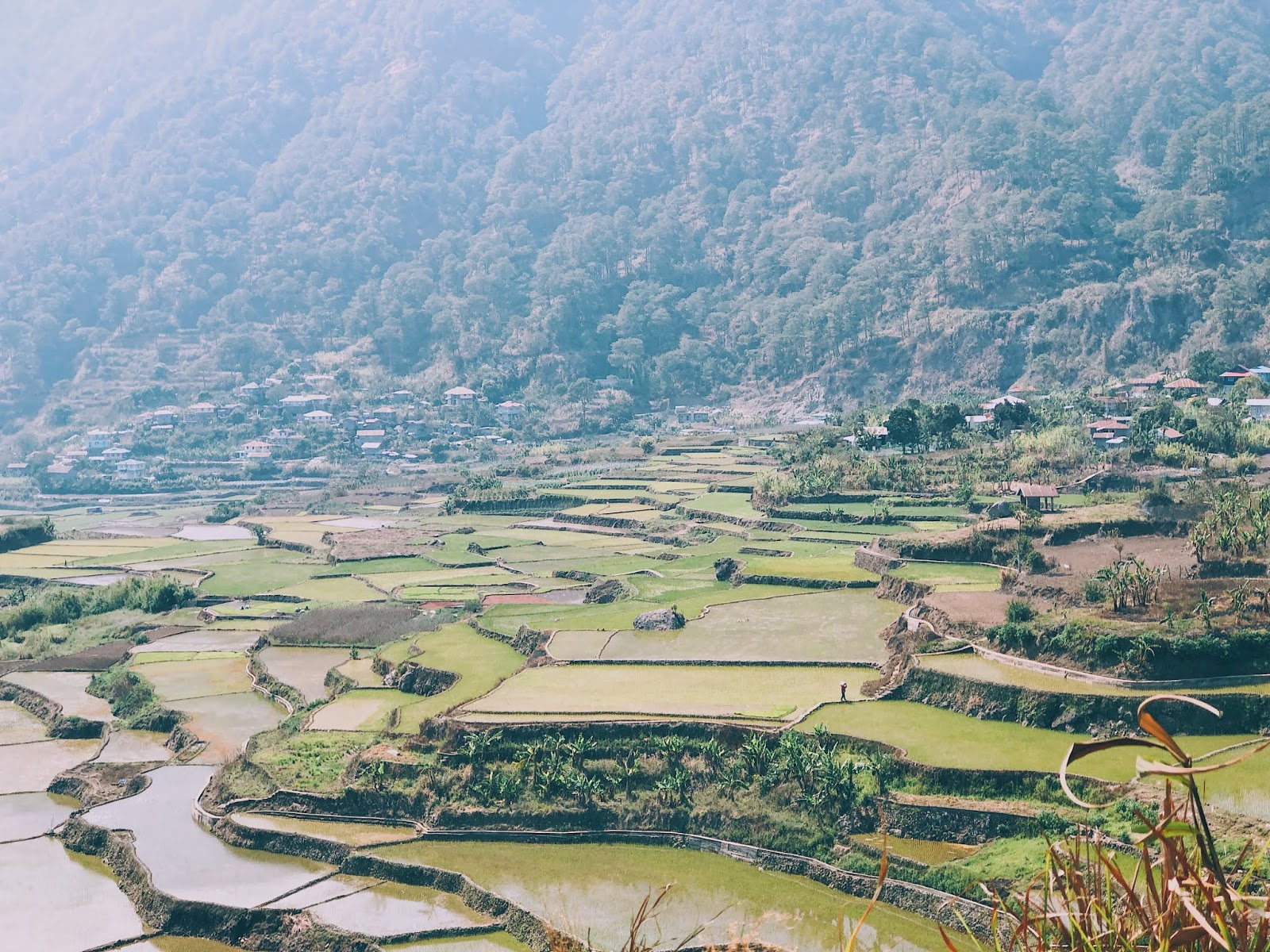 Marvelous Sagada Rice Terraces