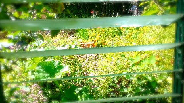 walworth garden farm