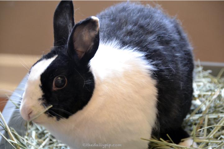 do not buy an easter rabbit