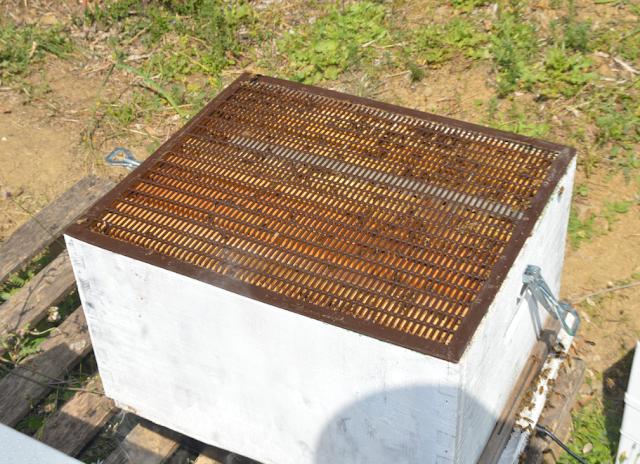 Τι γίνετε με τη σμηνουργία όταν έχεις πάνω από 250 μελισσια: Οι μέθοδοι των μεγάλων μελισσοκόμων!